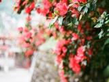 七夕脱单!你的桃花要往哪儿找