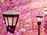 十月爱情沙龙国际注册最旺盛的星座