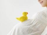 怀孕就会变傻的星座准妈妈