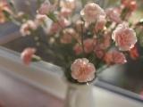 鲜花测试:你在感情里所存在的弱点