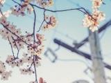 【2018年3月18日——3月24日】澳门正规博彩十大网站情感运势