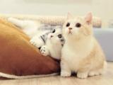 12星男选小奶猫女友or小野猫女友?