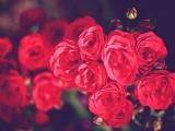 你能否為自己的愛情鎖鮮呢?