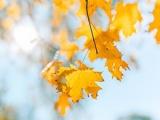 这个秋天哪种颜色能助你好运?