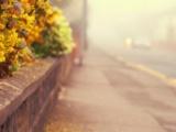 【2018年11月18日——11月24日】星座情感运势