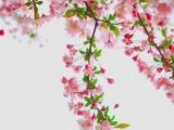 今年的桃花运能给你带来收获吗?
