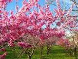 测你今年的桃花会是哪种主色调?
