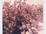 生肖虎的春日恋爱指数