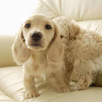 十二星座代表什么狗狗?