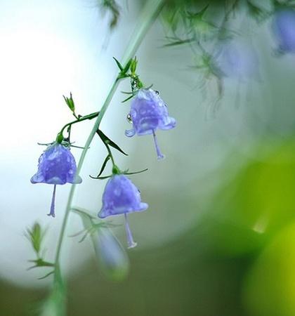 十二星座的守护花是什么?